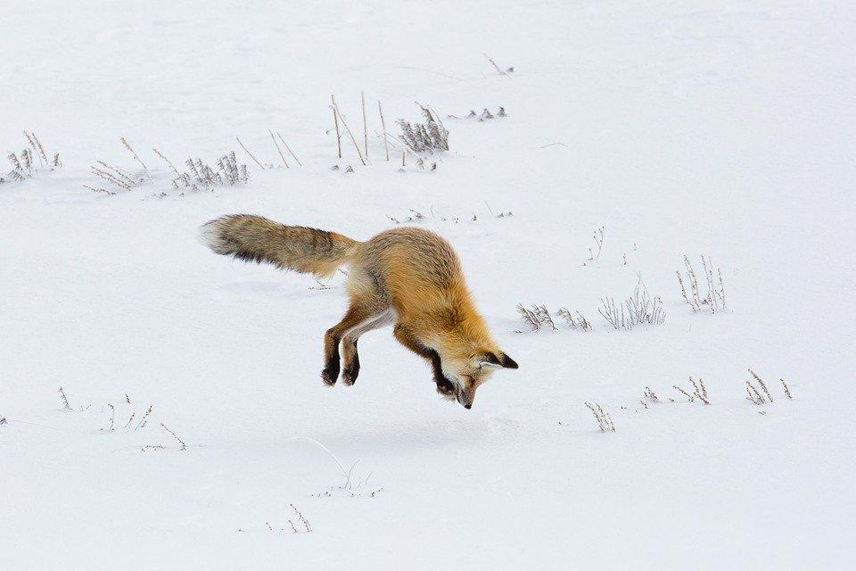 abbigliamento caccia battute invernali