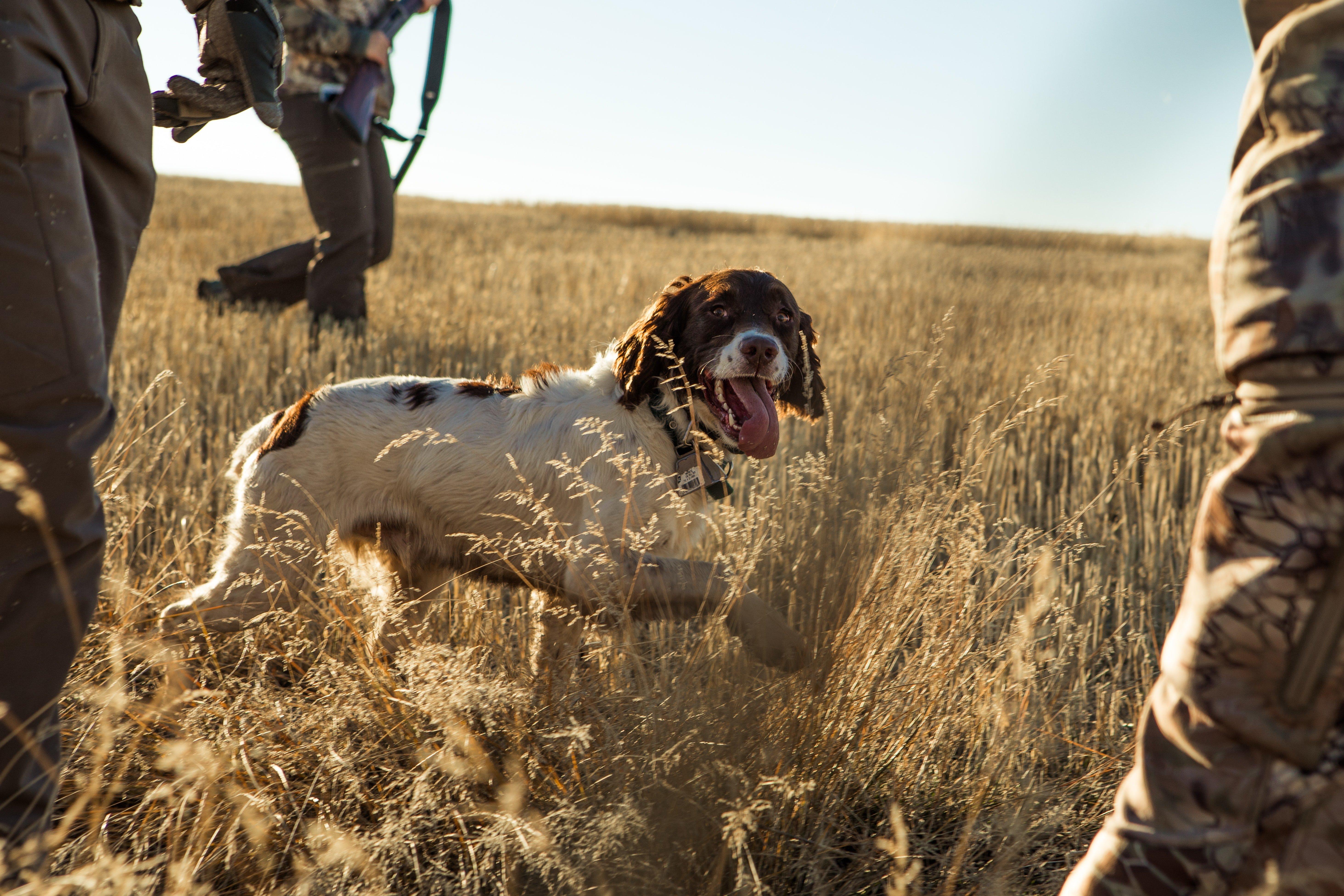accessori cane da caccia generale