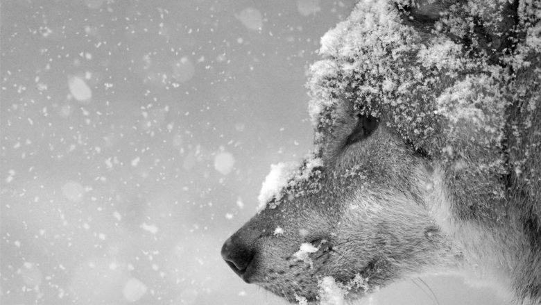 cacciare in inverno